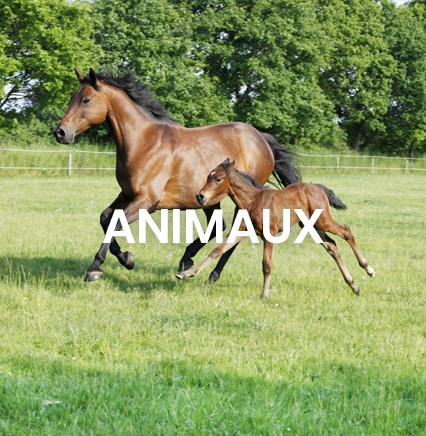 gamme pour chevaux répulsif naturel