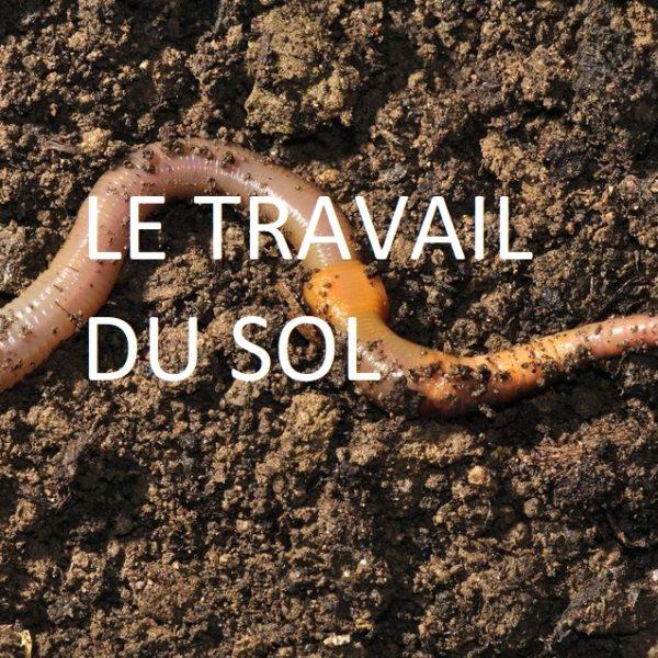 1094448-common-earthworm-on-garden-soil