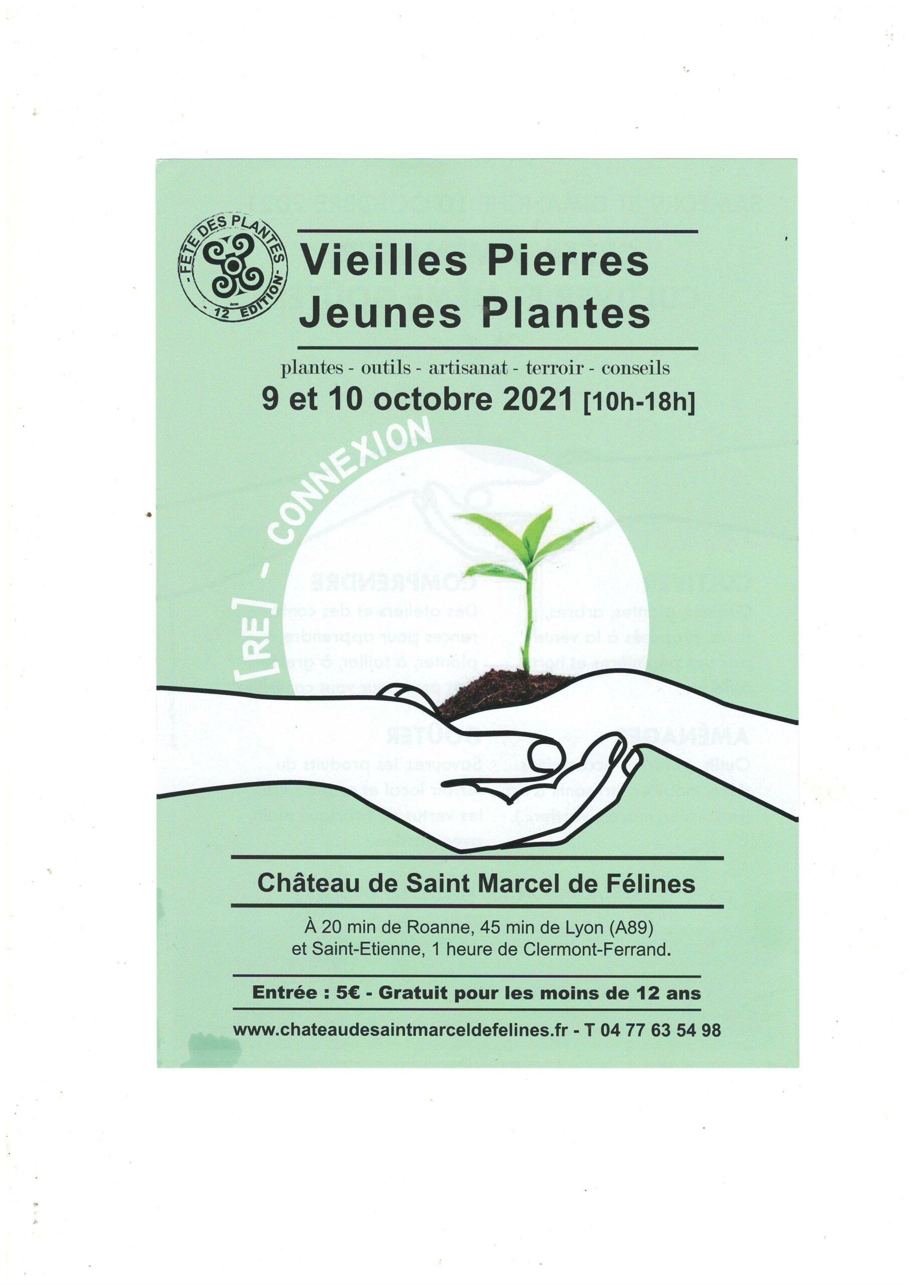 Vieilles Pierres Jeunes Plantes